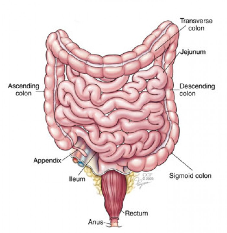 Colon cancer in older adults